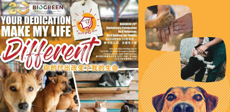 Pledge For 20 Homes - Be A Volunteer, Be A Sponsor For Furkids (13/07/2019)